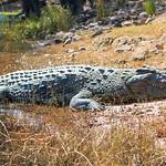 Chobe National Park Botswana, June 2017